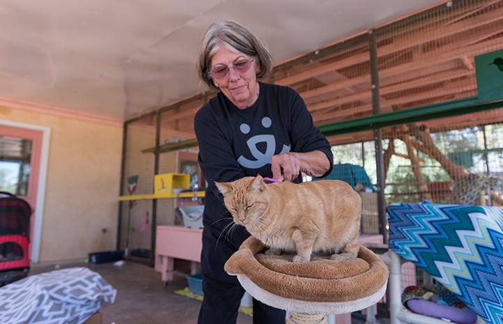 Volunteer Alma Davenport brushing an orange tabby cat