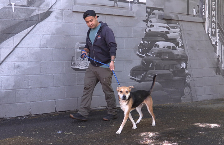 Volunteer Christian Ordonez walking a dog on a leash in front of a mural on a wall featuring vintage cars