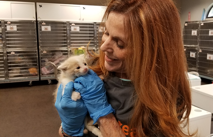 Volunteer Connie Murphy wearing rubber gloves and holding a tiny kitten, with kennels behind her