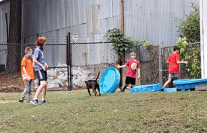 Jack Hallock and his birthday party guests in the play yard with a dog and some blue kiddie pools