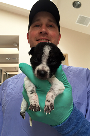 Jared volunteering at the Best Friends puppy admissions building