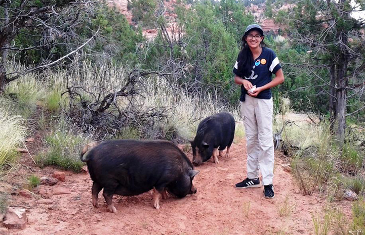 Chloe volunteering at Piggy Paradise, posing with two pigs