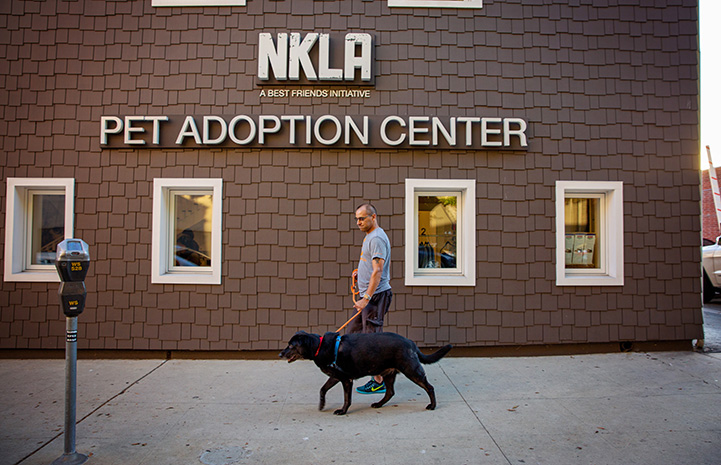 Volunteer Robert Lobo walking Knox the dog in front of the NKLA Pet Adoption Center