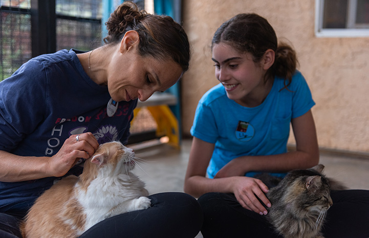 Lily and Jenny Grouf volunteering at Quincy House in Cat World sitting down on the ground with cats on their laps