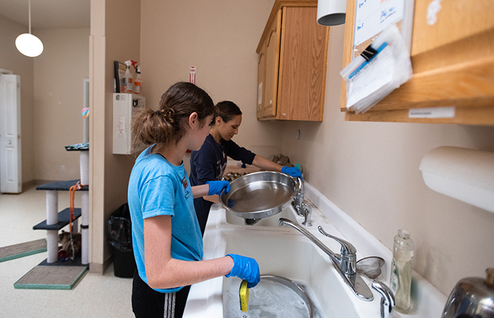 Lily Grouf and her mom washing dishes as they volunteer at Cat World