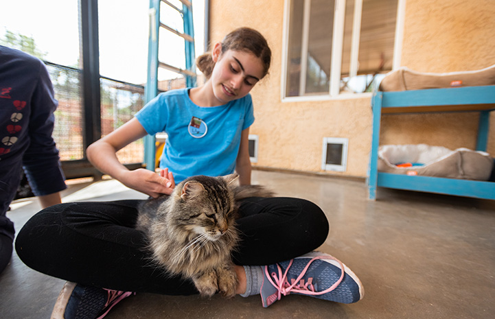 Lily Grouf volunteering at Cat World while sitting cross-legged on the ground with a medium hair brown tabby on her lap