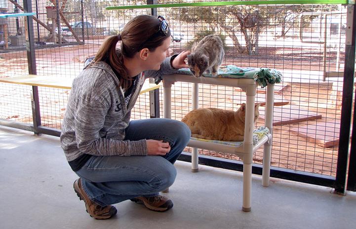 Volunteer Lizel Allen crouching down to pet a cat on a Kurunda bed