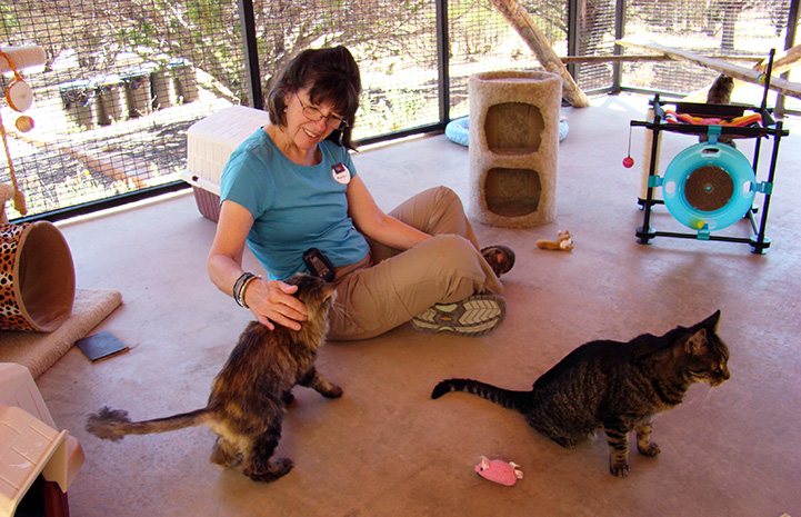 Marylin Sharp sitting on the floor at Cat World surrounded by friendly kitties