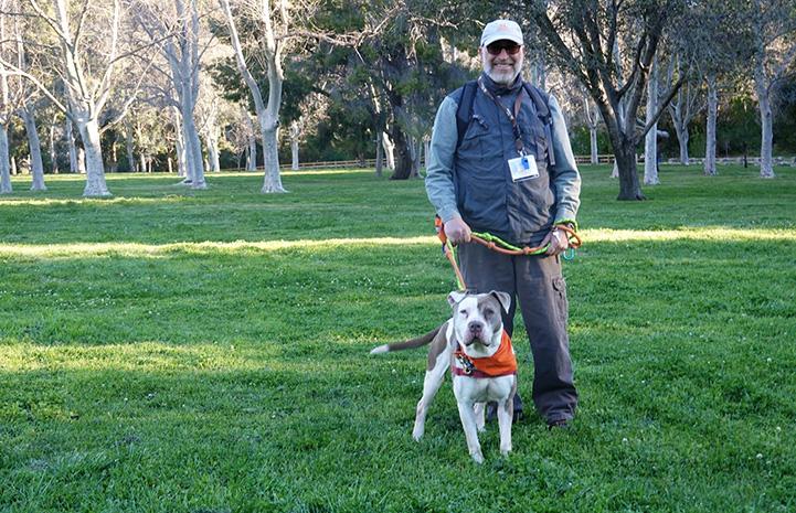 David Glazer walking a pit-bull-type dog on some green grass