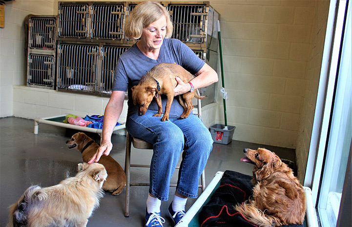 Volunteer Roberta Monti helps the dogs in Atlanta