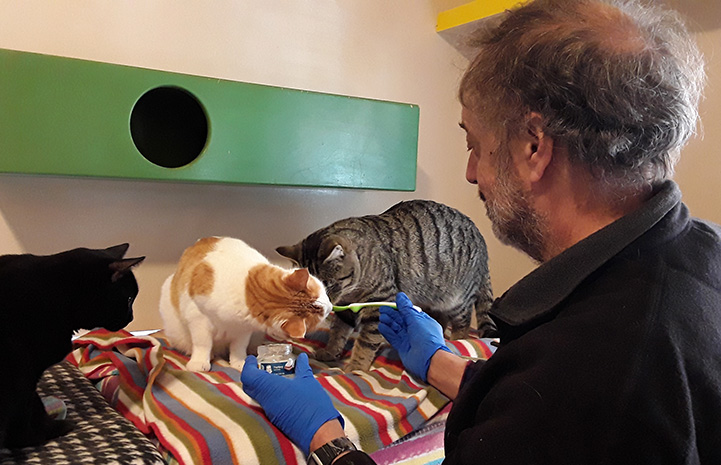 Volunteer Steve spoon feeding some baby food to some cats