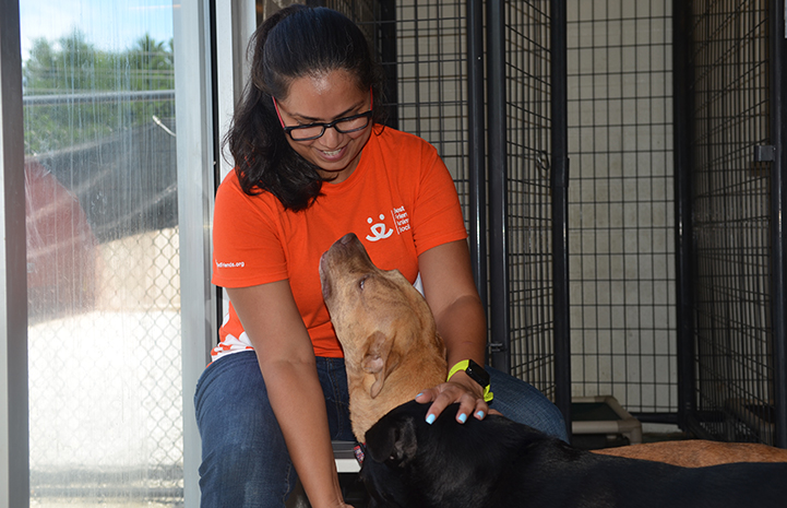 Volunteer Swarnima Singh smiling and petting two dogs