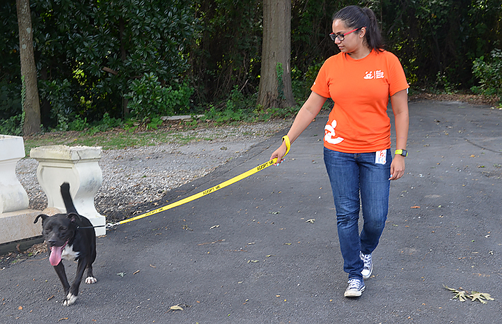 Volunteer Swarnima Singh walking Sirius the dog