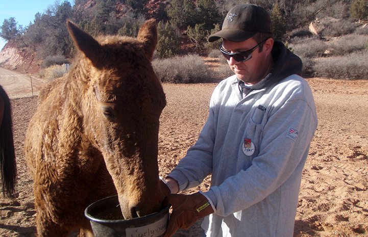 Volunteer Tyler Bernius feeding Curly Sue the horse