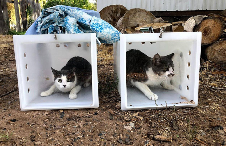 Two cats in boxes ready to be released as part of TNR