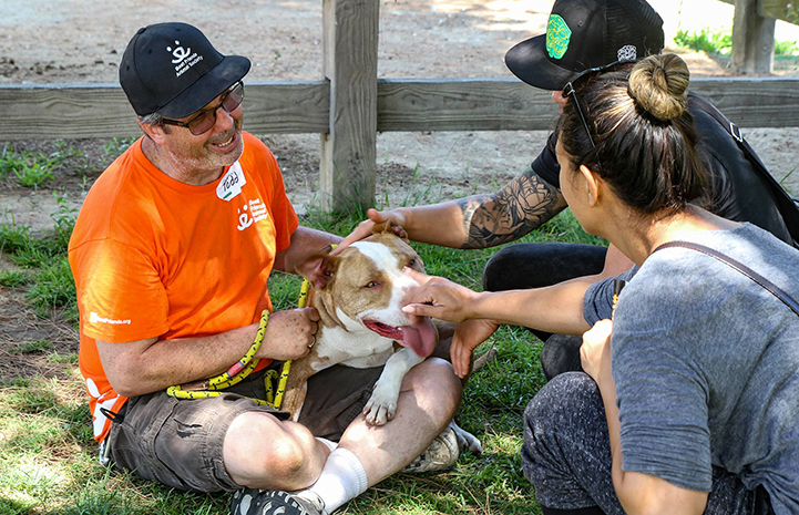 Volunteer Todd wearing a bright orange T-shirt with a brown and white pit bull terrier in his lap that other people are petting