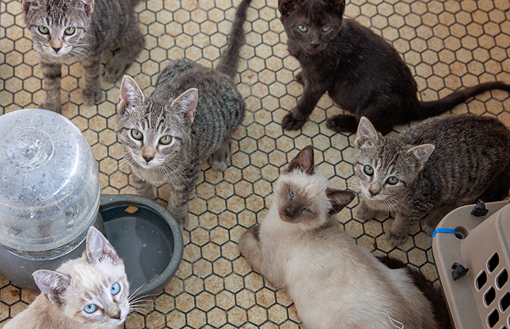Large litter of kittens being fostered by Michael Moran