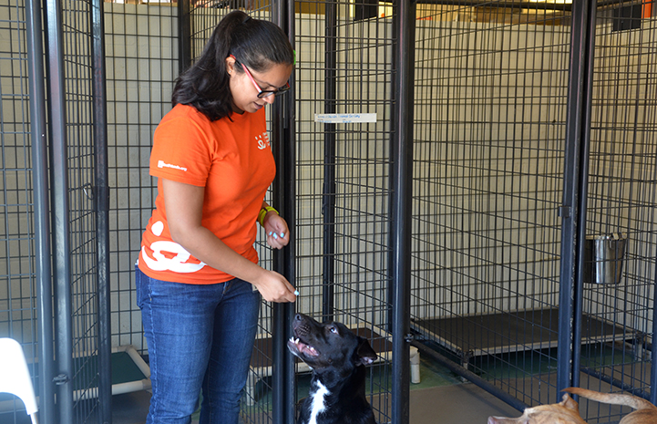 Volunteer Swarnima Singh helping to train Sirius the dog