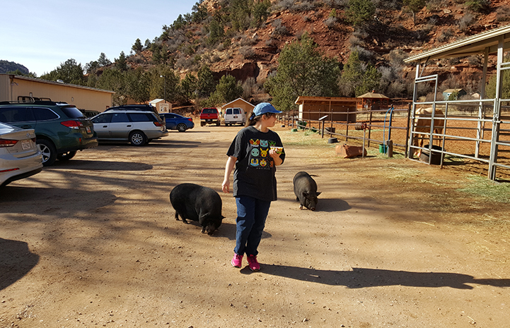 Walking the pigs was volunteer Sheri Slattery's favorite job at the Sanctuary