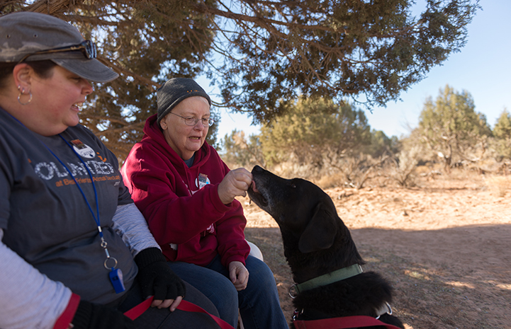 After surviving cancer again, Mary got to do what she most wanted to do — make that third volunteer trip to Best Friends