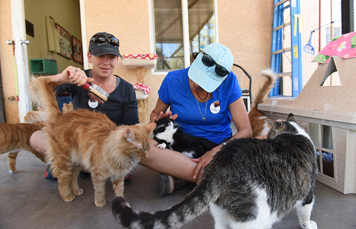In Cat World, volunteers Monica Daugherty and Kitty Chelton helped to socialize shy cats