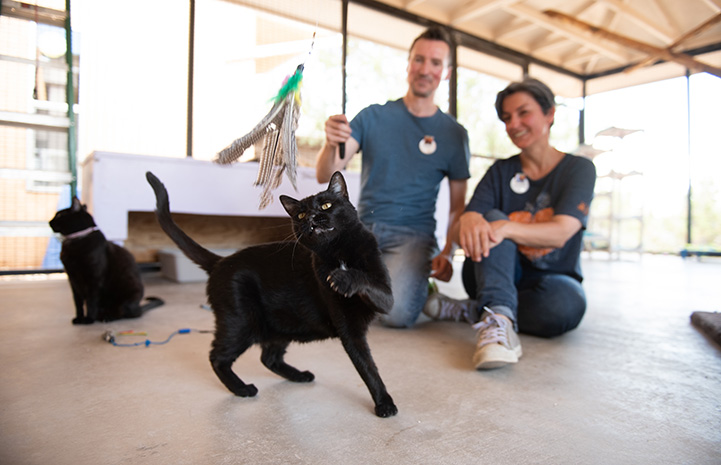 Volunteers Mike and Andrea playing with Irby the black cat at Cat World