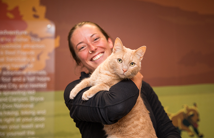 Smiling woman holding buff tabby cat