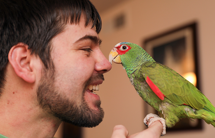 Jason and Emily Ketchum determined that Jujubean the white-fronted Amazon parrot would be a perfect addition to the family