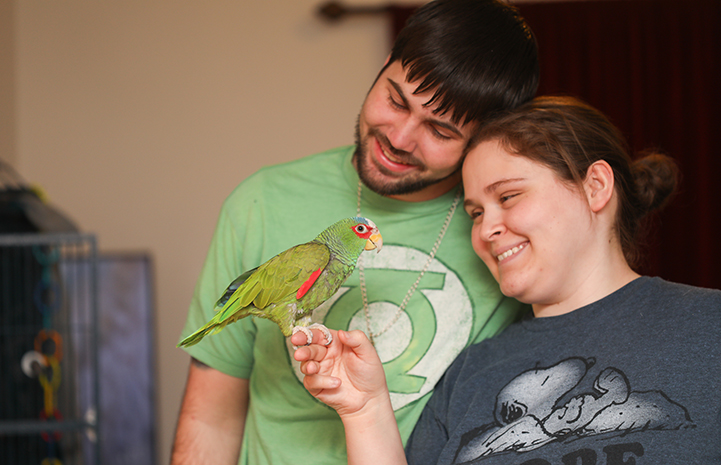 Jujubean the white-fronted Amazon parrot hit the jackpot when he was adopted by Jason and Emily Ketchum