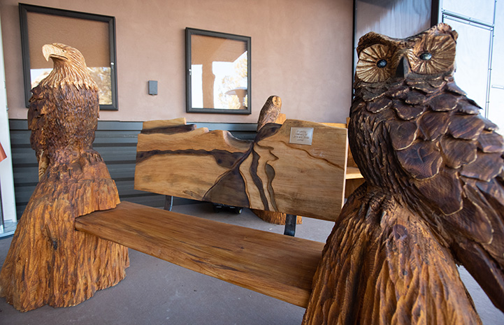 Wooden benches carved with birds of prey from Grand Opening of the new Wild Friends