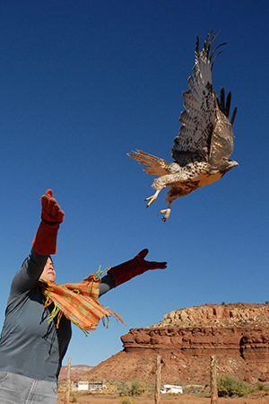 A wild hawk being released after being rehabilitated at Wild Friends