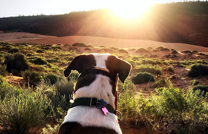 Willa perfected doggie Zen during a sunset
