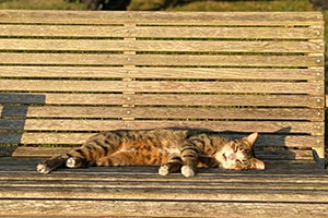 Tabby cat lying in a sunbeam on a wooden bench
