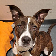 Adopt Zoey the dog available for adoption from New York