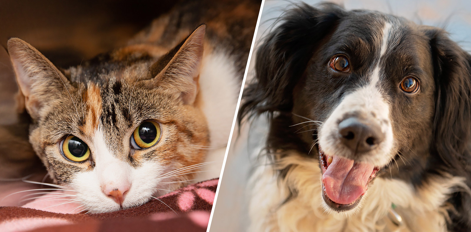 Adoptable cat and dog at Best Friends Animal Sanctuary