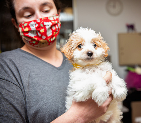 Woman wearing a mask holding a fluffy white puppy