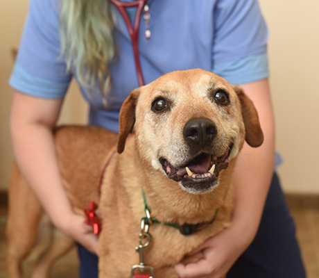 A person wearing a stethoscope hugging a brown dog