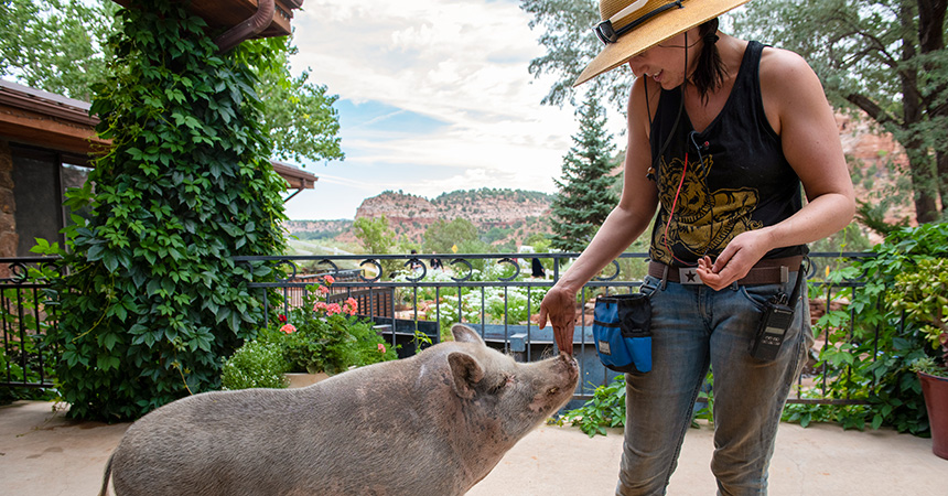 Pig reaching snout up to sniff the hand of a woman wearing a hat, while at Best Friends Animal Sanctuary
