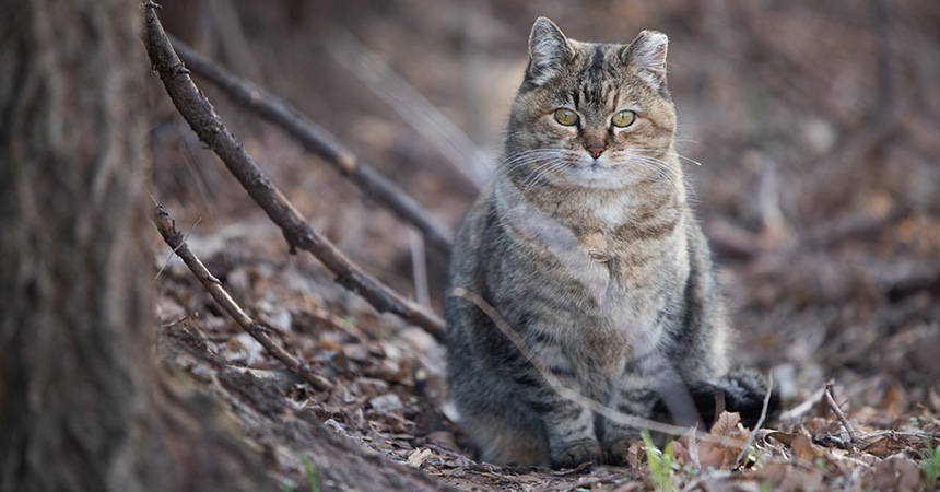 A brown tabby cat outside on some fallen leaves by a tree trunk