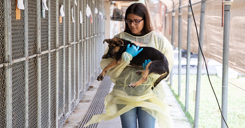Woman wearing a protective gown carrying a puppy next to a row of outside dog kennels