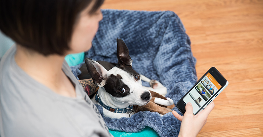 Dog lying on a woman's lap while she's looking at the Best Friends Vet Access app on her mobile phone