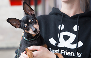 https://bestfriends.org/Best%20Friends%20advocates%20for%20homeless%20animals%20like%20this%20black%20and%20brown%20min%20pin%20dog
