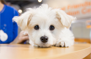 https://bestfriends.org/Promoting%20adoption%20vs.%20buying%20of%20pets%20like%20this%20white%20puppy