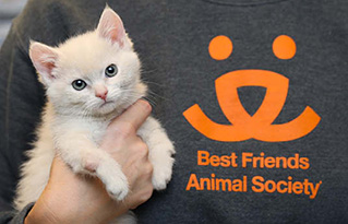 https://bestfriends.org/White%20kitten%20being%20held%20by%20someone%20wearing%20a%20Best%20Friends%20Animal%20Society%20logo%20sweatshirt