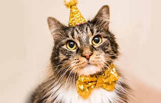 https://bestfriends.org/long%20hair%20tabby%20with%20part%20hat%20and%20bowtie