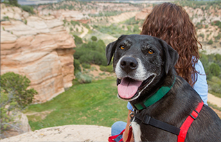 https://bestfriends.org/Woman%20and%20dog%20overlooking%20Best%20Friends%20Animal%20Sanctuary%20in%20Angel%20Canyon%2C%20near%20Kanab%2C%20Utah