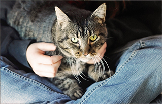 https://bestfriends.org/Volunteer%20petting%20a%20cat%20at%20Best%20Friends%20Animal%20Sanctuary%2C%20near%20Kanab%2C%20Utah