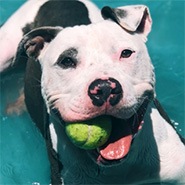 Adopt Bug the dog available for adoption from Los Angeles