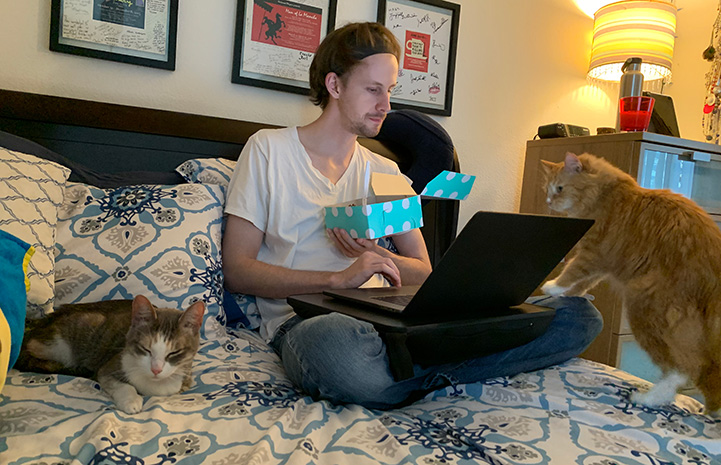 Poppy the cat on a bed with a person looking at a laptop computer and foster kitten