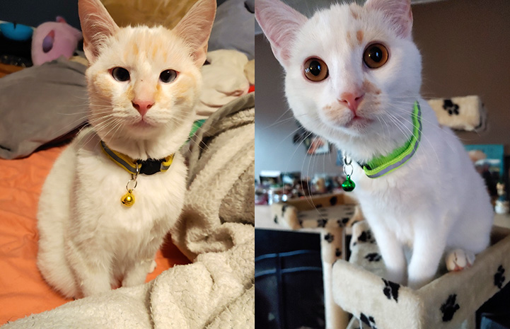 Jupiter and Saturn, the two kittens adopted along with Monkey the cat